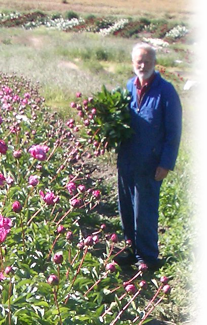 gerry_picking_peonies